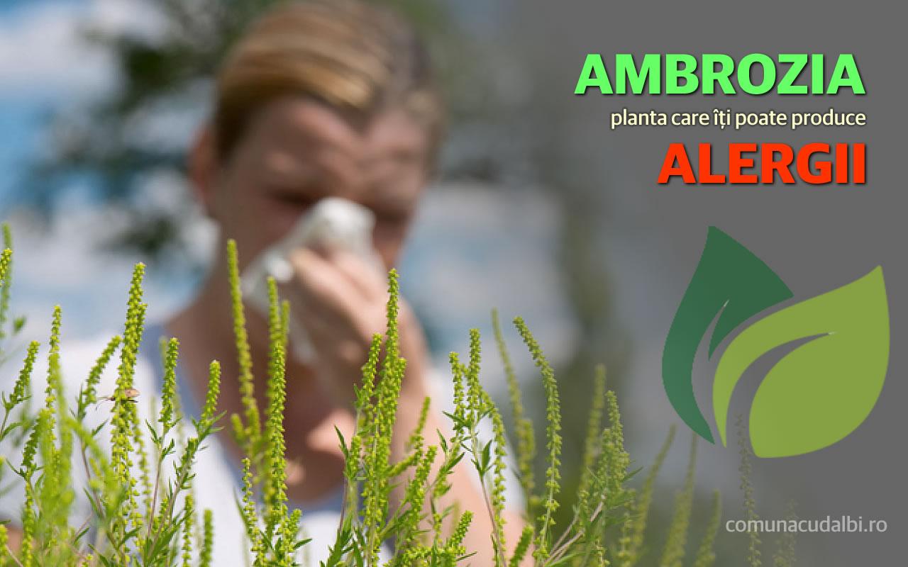 Ambrozia planta care poate produce alergii Comuna Cudalbi_1280x800